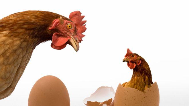huevo y gallina