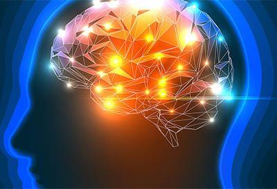 neurociencia docencia universitaria
